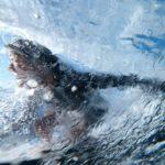 Apple Watch 3 – il nuovo orologio per i Surfers
