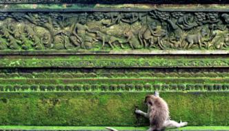 Bulan Cepat | A Quick Month in Bali